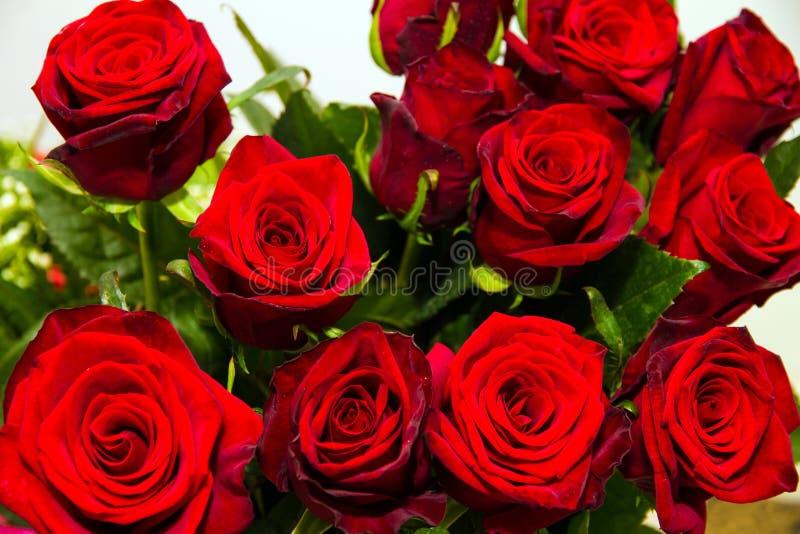 Rosas hermosas rojas foto de archivo imagen de festivo - Rosas rosas hermosas ...