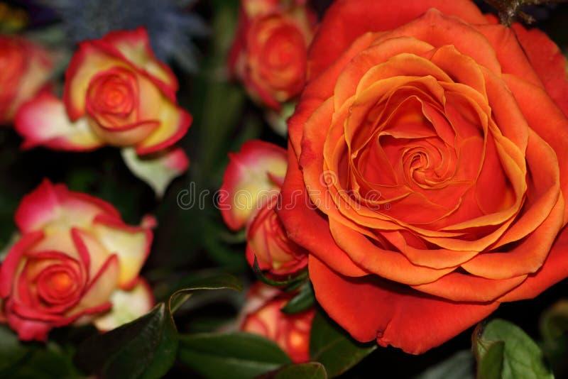 Rosas laranja-vermelhos grandes e flores pequenas em um ramalhete foto de stock