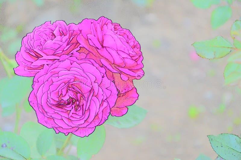 Rosas macras con bosquejo del color foto de archivo
