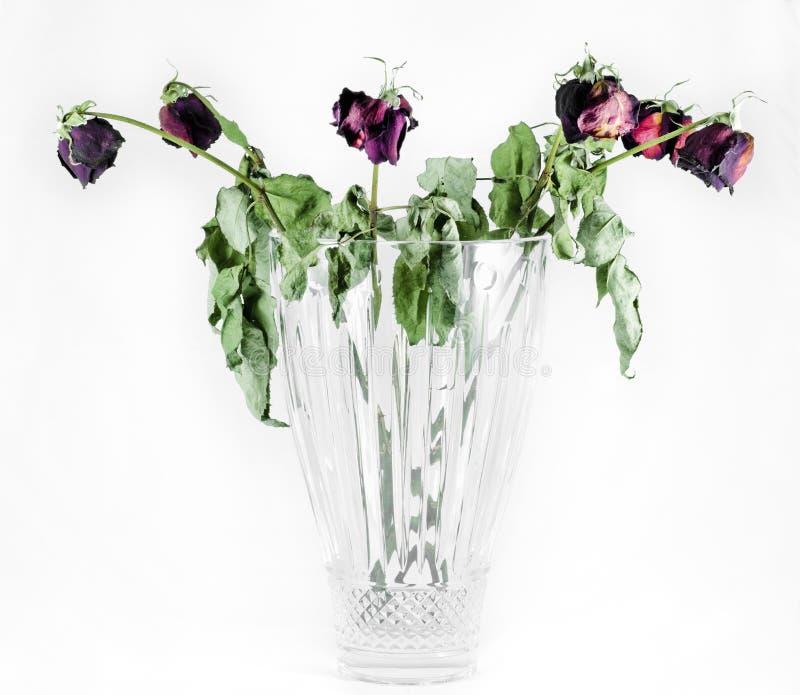 Rosas muertas llenas fotografía de archivo libre de regalías