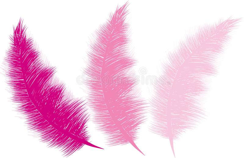 Rosas mullidos de las plumas stock de ilustración