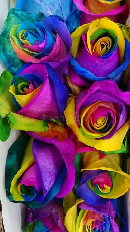 Rosas multicoloras fotos de archivo