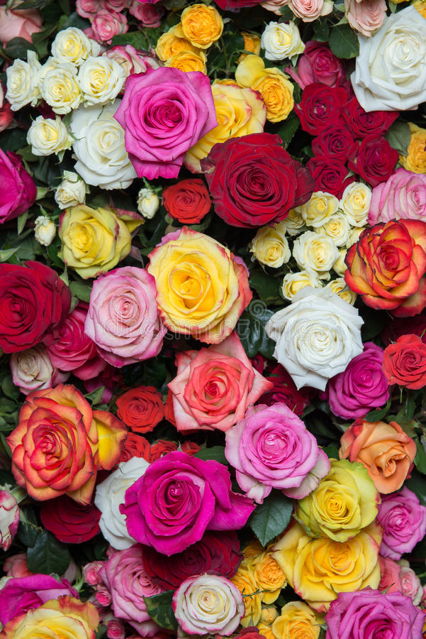 Download Rosas multicoloras 2 imagen de archivo. Imagen de hermoso - 44855537