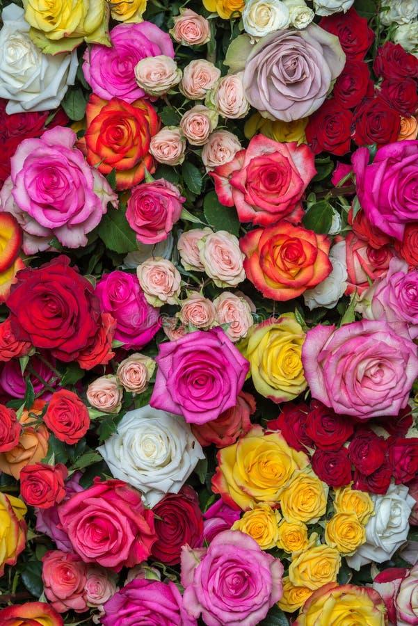 Download Rosas multicoloras foto de archivo. Imagen de fondos - 44855856