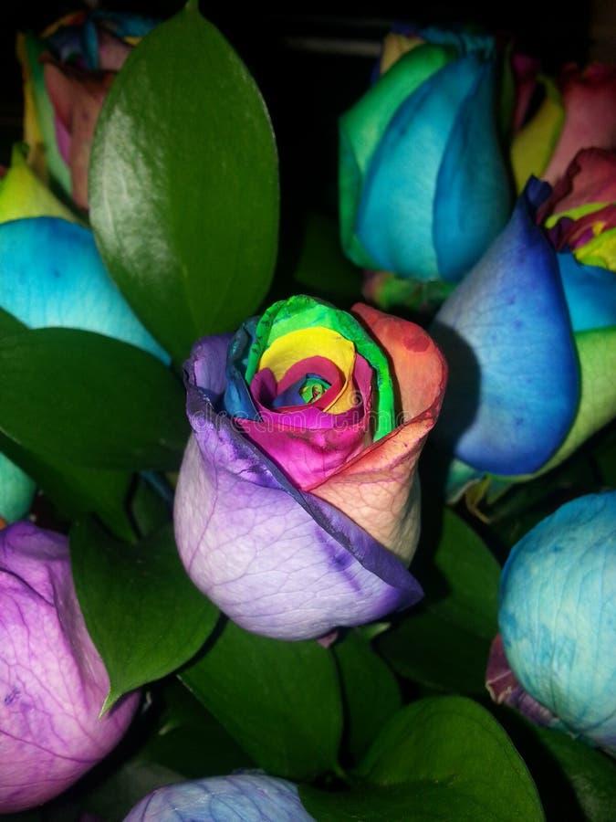Rosas multicoloras imágenes de archivo libres de regalías