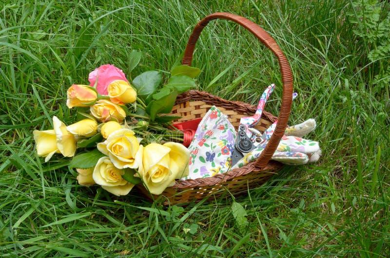 Rosas na cesta fotografia de stock royalty free