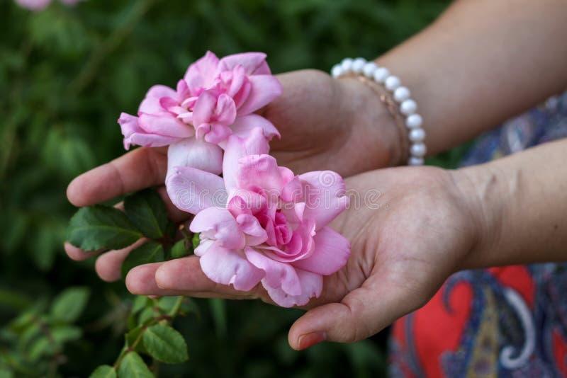 Rosas nas palmas foto de stock royalty free