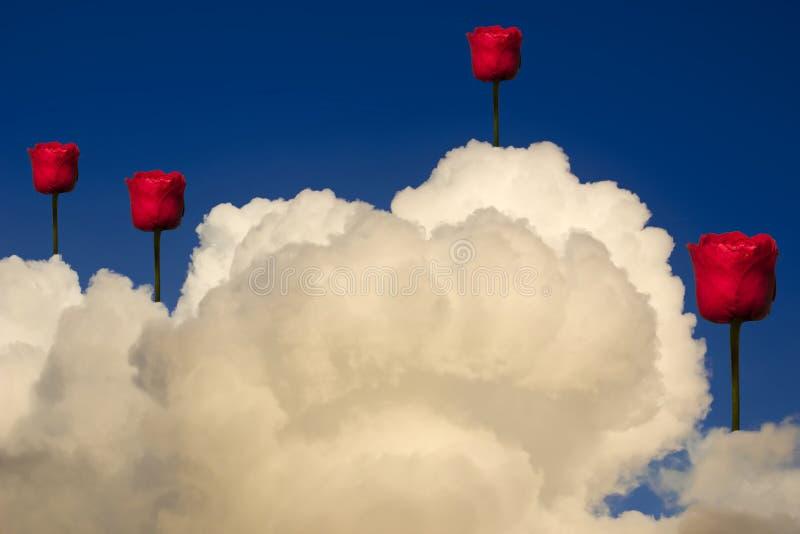 Rosas no céu ilustração do vetor