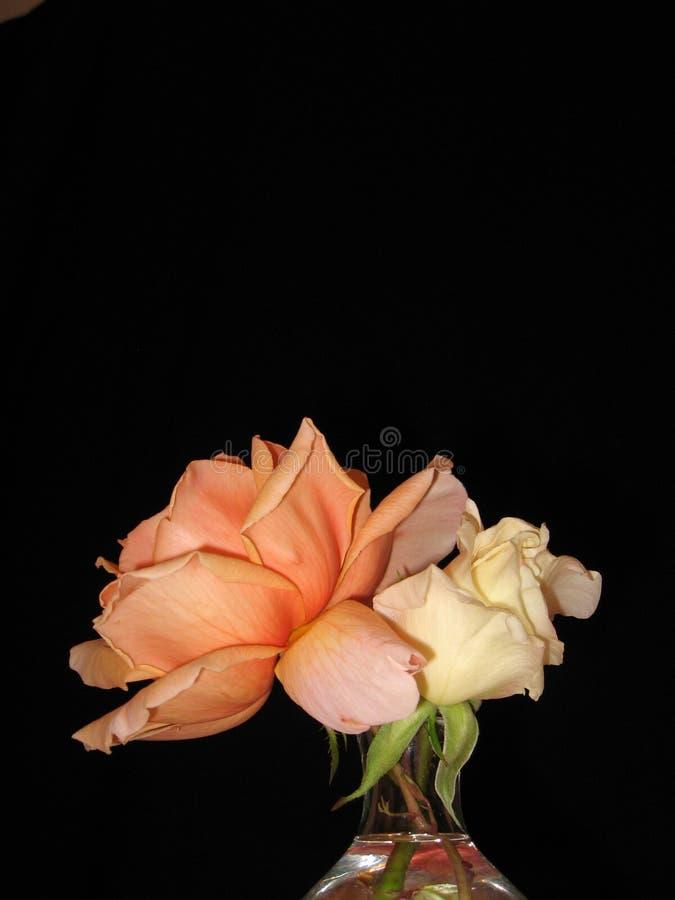 Rosas no preto imagens de stock royalty free