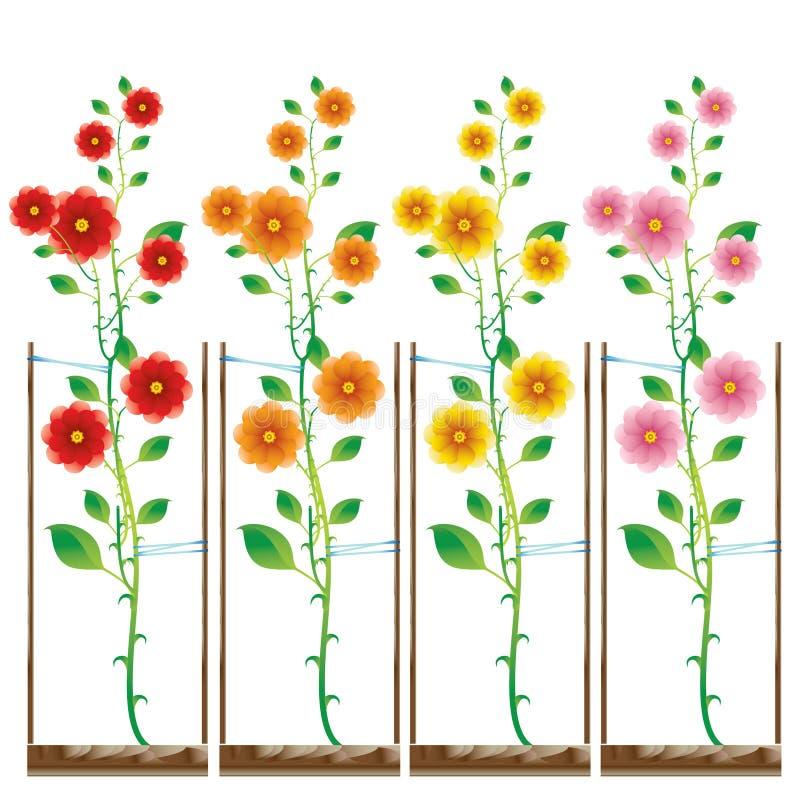 Download Rosas Plantadas En Diverso Color Ilustración del Vector - Ilustración de icono, sensación: 7277928