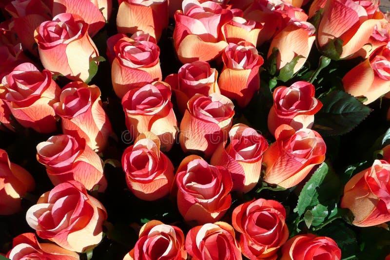 Rosas rojas imagenes de archivo