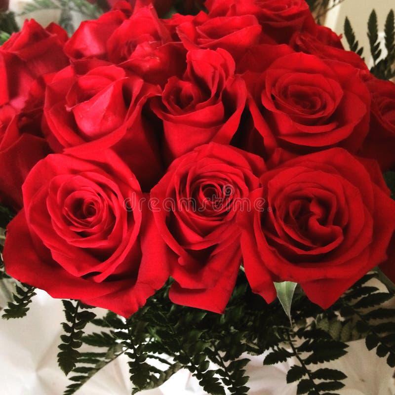 Rosas rojas stock image