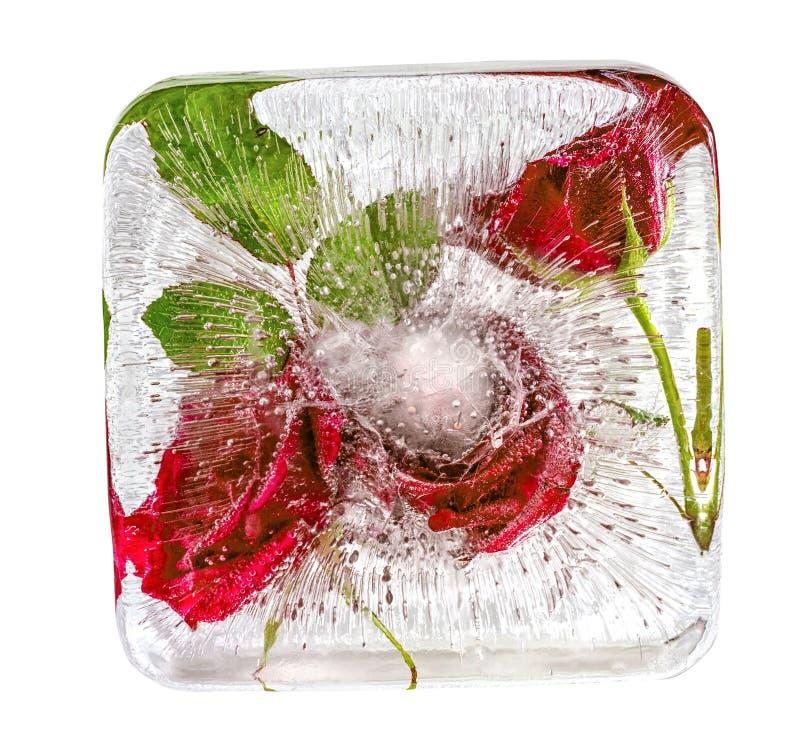 Rosas rojas congeladas en cubo de hielo imagen de archivo libre de regalías