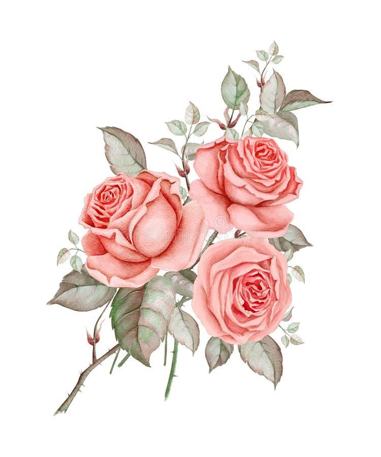 Rosas rojas de la acuarela en el fondo blanco libre illustration