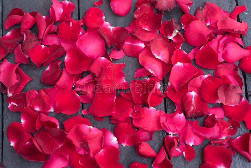 Rosas rojas del pétalo en el fondo de madera, vintage retro, fotografía de archivo