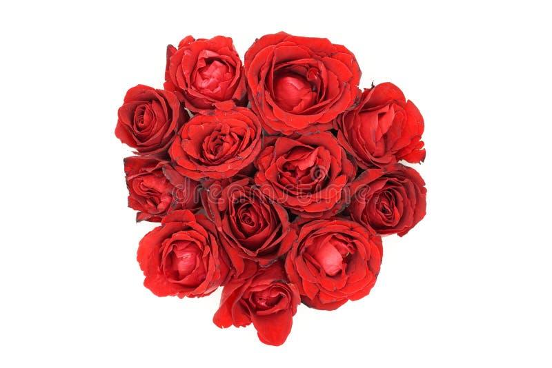 Rosas rojas en el fondo blanco fotos de archivo