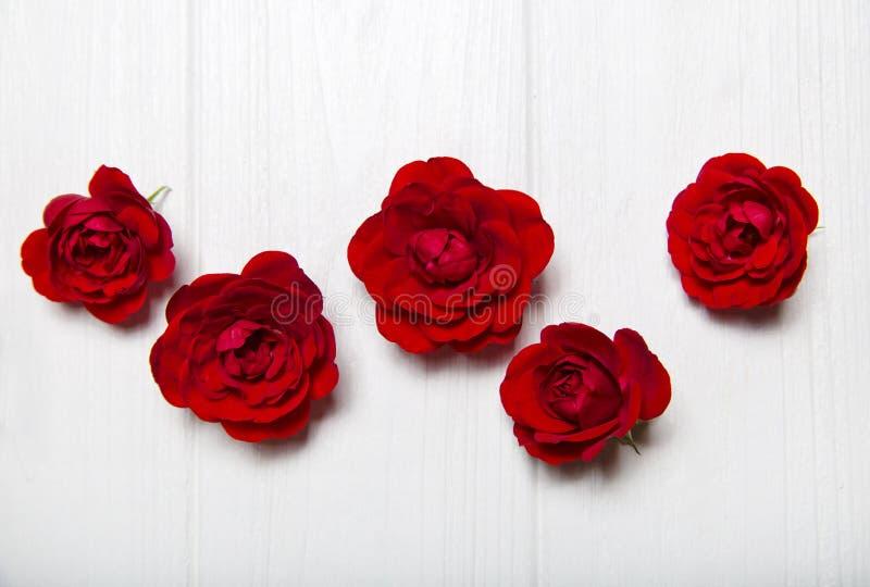 Rosas rojas en una tabla de madera blanca Modelo de flor imágenes de archivo libres de regalías