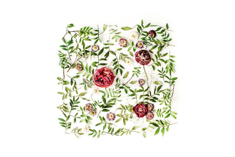 Rosas rojas o ranúnculo y hojas del verde en el fondo blanco imagenes de archivo