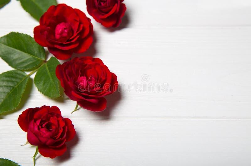 Rosas rojas y hojas del verde en una tabla de madera blanca Vintage Flor fotos de archivo libres de regalías