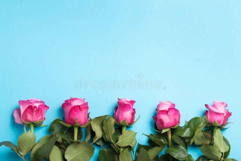 Rosas rosadas en fondo azul del color Visión superior imagenes de archivo