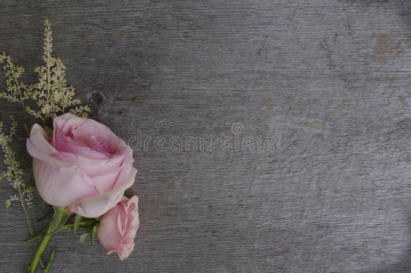 Rosas rosadas en fondo de madera rústico del tablero fotografía de archivo libre de regalías