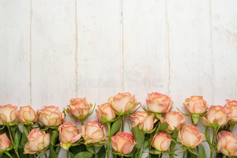 Rosas rosadas en un fondo de madera blanco, fondo festivo, aniversario, boda, el día de tarjeta del día de San Valentín fotografía de archivo