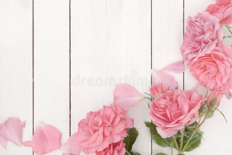 Rosas rosadas románticas en el fondo de madera blanco imágenes de archivo libres de regalías