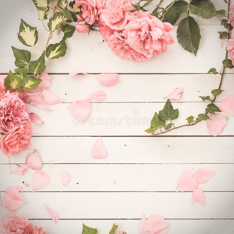 Rosas rosadas románticas en el fondo de madera blanco foto de archivo libre de regalías