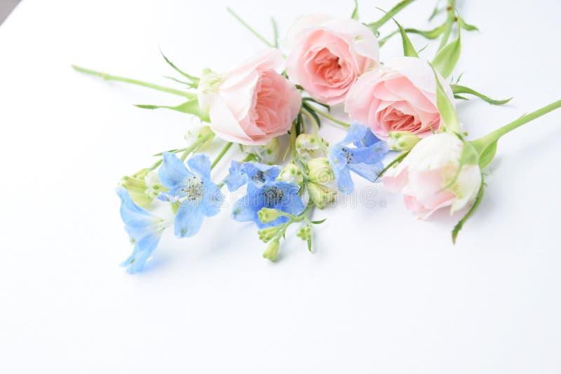 Rosas rosadas y flores azules imagenes de archivo