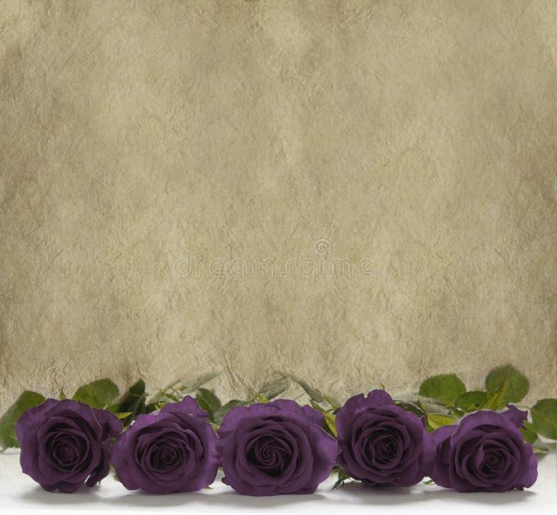 Rosas roxas em um fundo de pedra rústico fotografia de stock royalty free