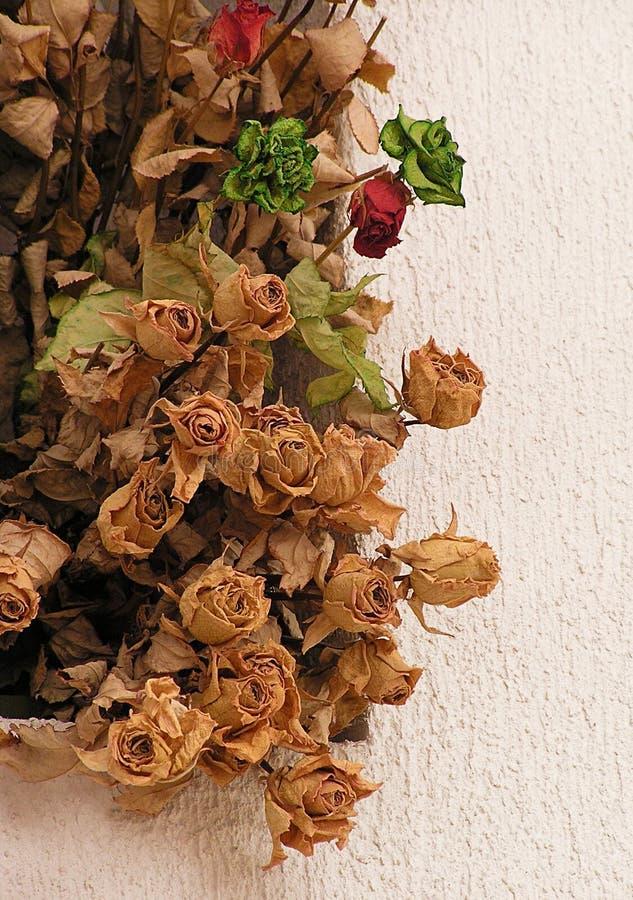Rosas secadas fotografia de stock royalty free