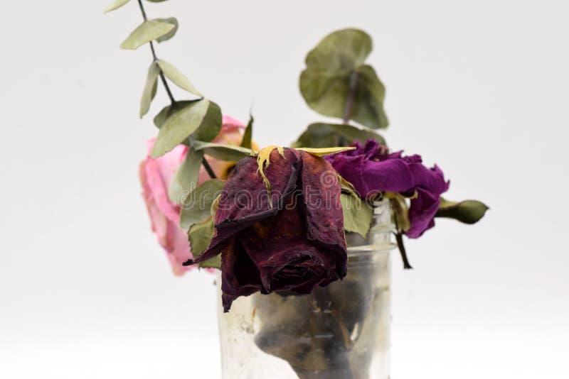 Rosas secadas con las hojas verdes en negro imagen de archivo libre de regalías