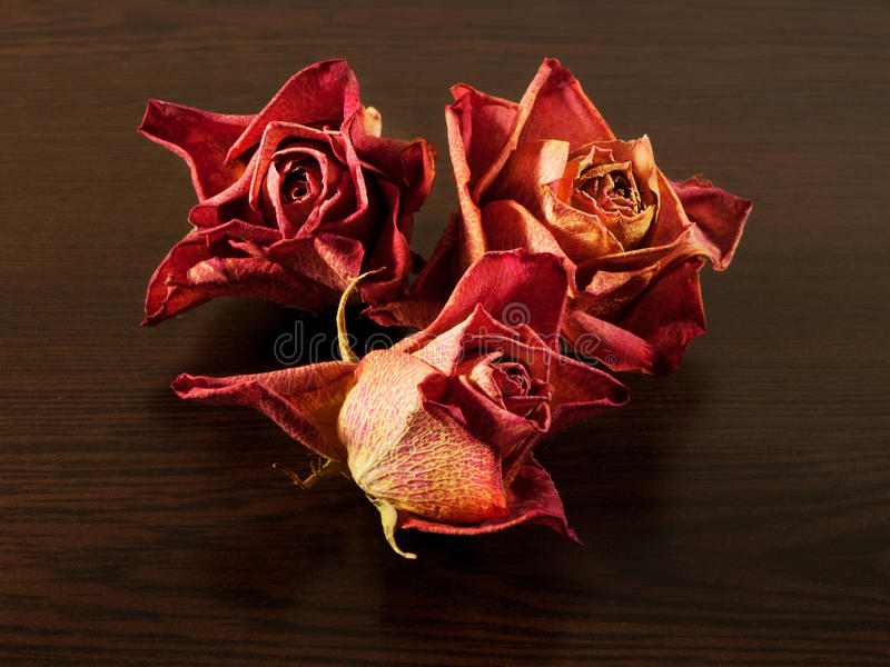 Rosas secadas na tabela da madeira escura foto de stock