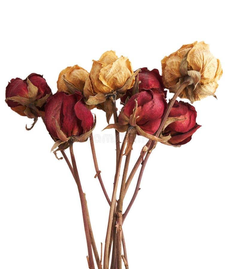 Rosas secas imagem de stock