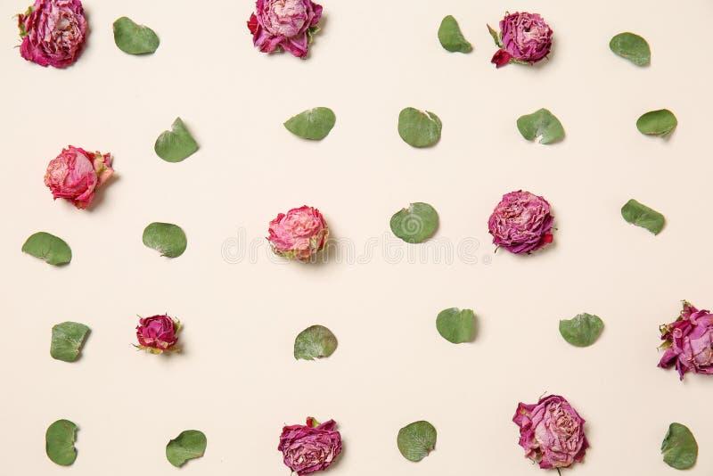Rosas secas bonitas no fundo branco fotografia de stock royalty free