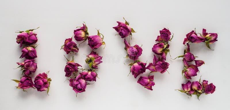 Rosas secas no fundo branco foto de stock royalty free