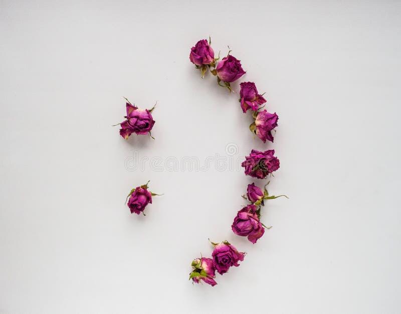 Rosas secas no fundo branco fotos de stock