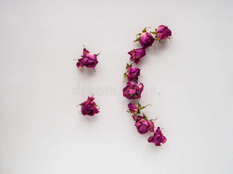 Rosas secas no fundo branco imagem de stock