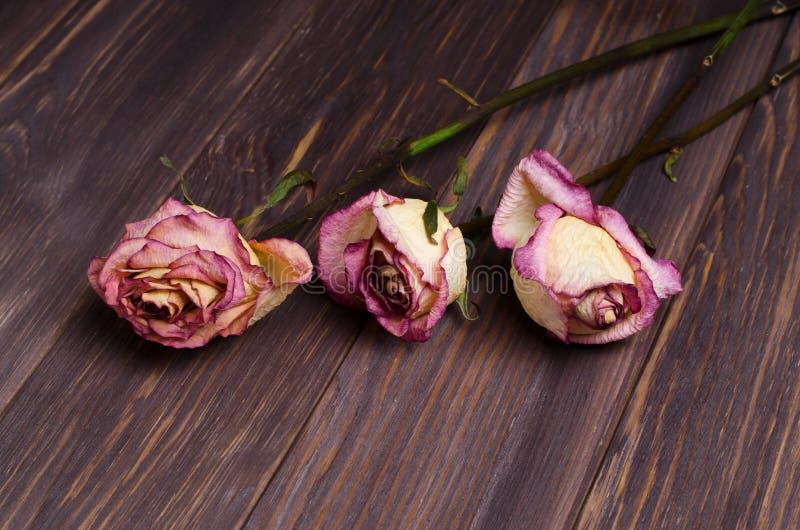Rosas secas no fundo de madeira fotografia de stock
