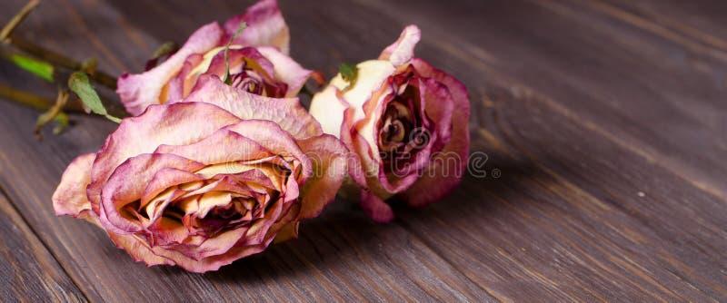 Rosas secas no fundo de madeira Fim acima fotos de stock