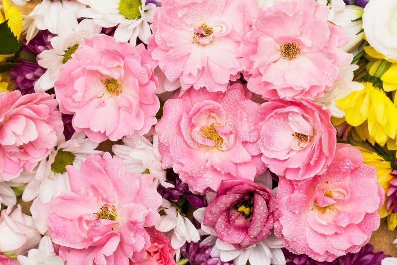 Rosas selvagens cor-de-rosa imagens de stock