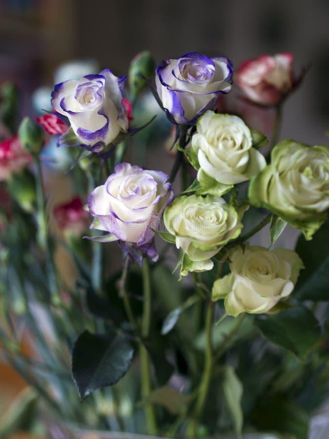 Rosas verdes e azuis Genetically alteradas fotografia de stock