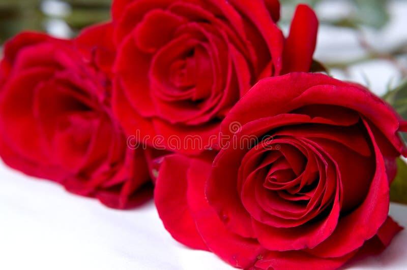 Download Rosas vermelhas imagem de stock. Imagem de foco, vermelho - 528005