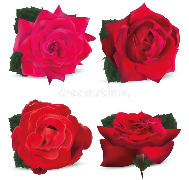 Rosas vermelhas da coleção no fundo branco Rosas do ?cone as rosas 3d realísticas fecham-se acima Ilustra??o do vetor ilustração royalty free