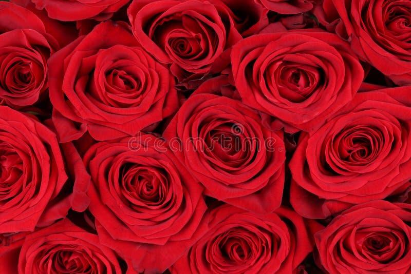 Rosas vermelhas do fundo no dia do Valentim ou de mães fotos de stock