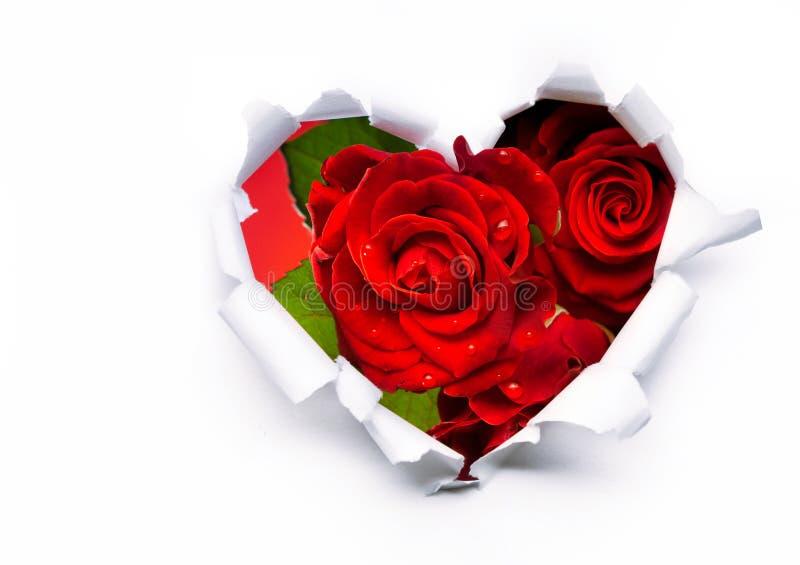 Rosas vermelhas e coração de papel no dia do Valentim foto de stock