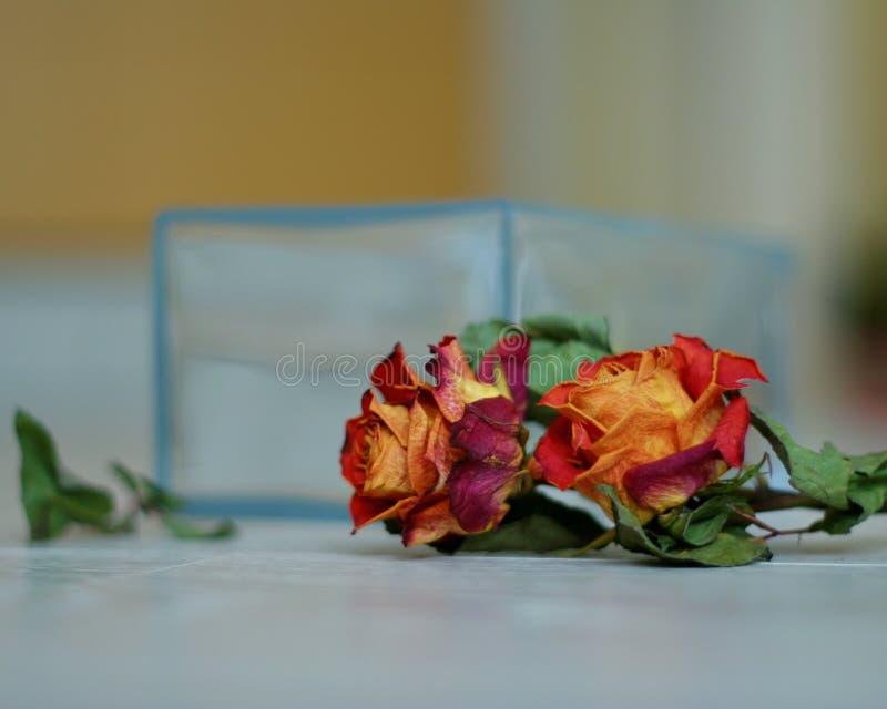 rosas vermelhas no assoalho fotos de stock