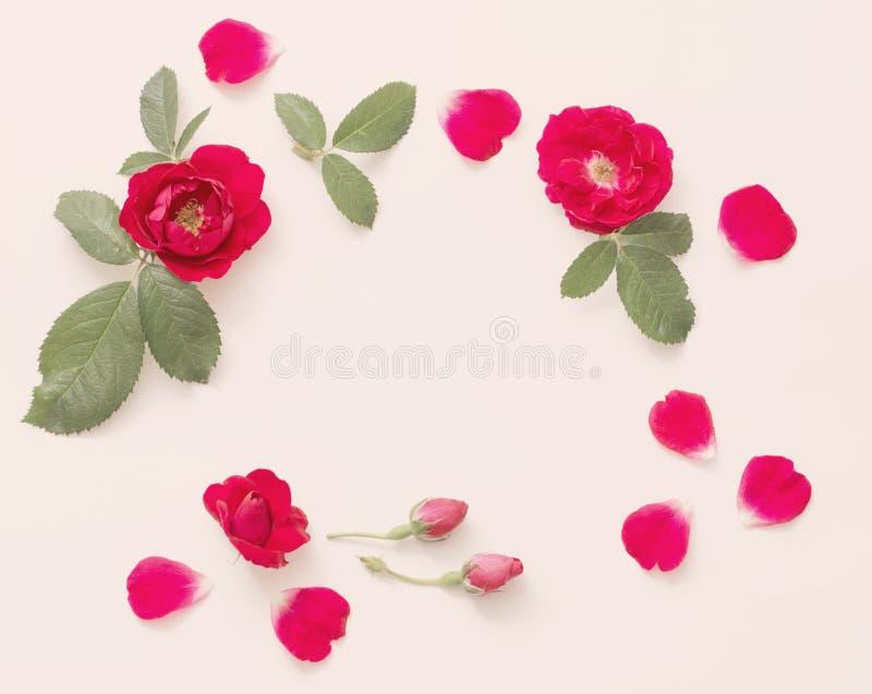Rosas vermelhas no fundo branco fotografia de stock