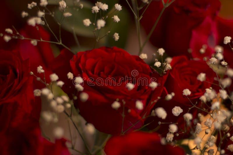 Rosas vermelhas românticas imagens de stock