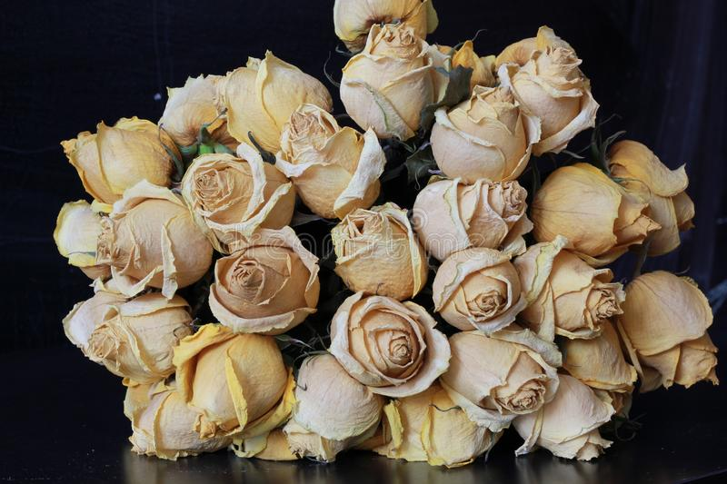 Rosas Withered imagem de stock royalty free